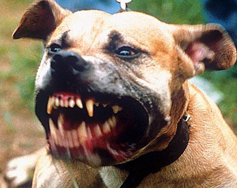 Vicious dog 003